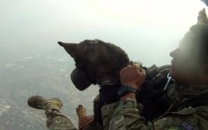 Os cães paraquedistas que combatem caçadores de animais na África