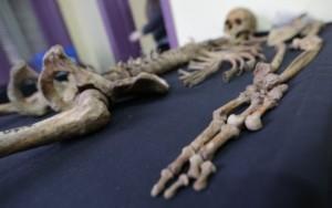 Como ossos de desaparecidos ajudam a recontar a história da ditadura argentina