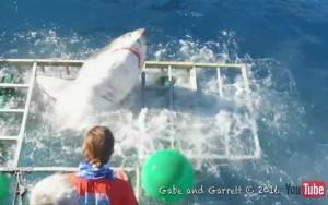 Tubarão invade gaiola de mergulhador no México