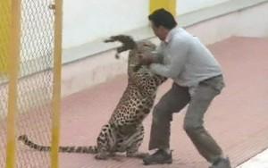 Leopardo invade escola na Índia