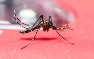 Zika na Colombia