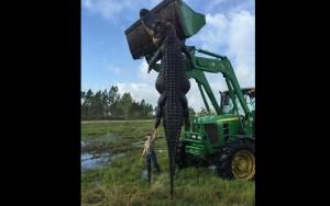 Caçador se surpreende com jacaré gigante que atacava gado