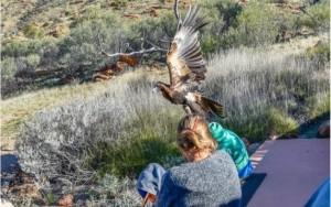 O impressionante momento em que uma águia tenta carregar menino na Austrália