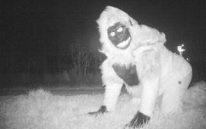 """Em busca de leão à solta, polícia dos EUA encontra """"surpresa"""" bizarra em câmeras"""