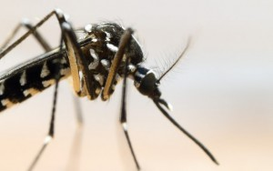 """""""É quase impossível acabar com o Aedes aegypti"""", diz presidente da Fiocruz"""