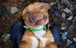 Conheça Picasso, o cachorro rejeitado que virou um astro da internet